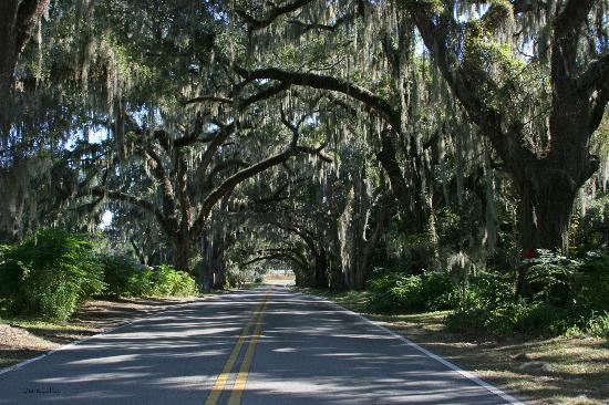 Floral City, FL: Avenue of Oaks
