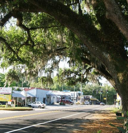 Floral City, FL: Beautiful oaks