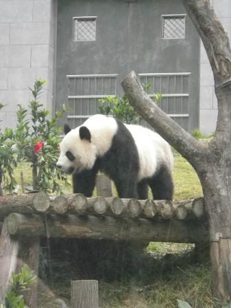 Seac Pai Van Park: Wow, so close with the panda!
