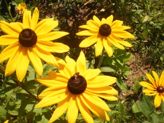 Domaine des Merveilles : Plusieurs variétés de fleurs sur le site.