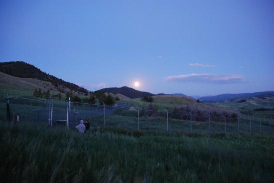 Howlers Inn Bed & Breakfast and Wolf Sanctuary: Moon rise over the wolf pens