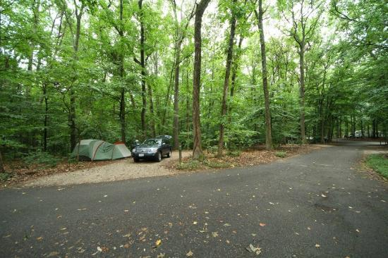 Pohick Bay Regional Park Campgrounds : Nice wooded sites.