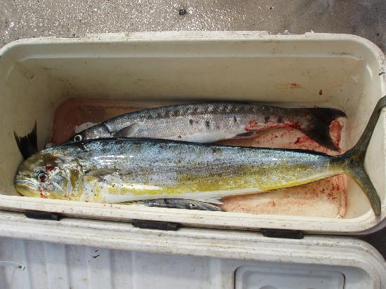 Va-i-Moana Seaside Lodge: The mahimahi (masimasi) and barracuda caught by my husband and friends on viamoana's fishing cha