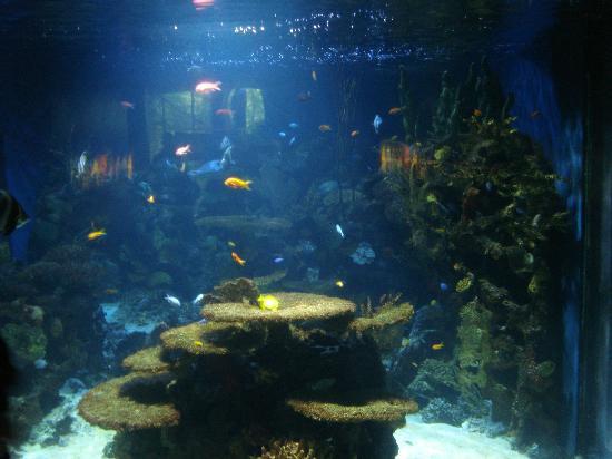 1 Picture Of Vancouver Aquarium Vancouver Tripadvisor