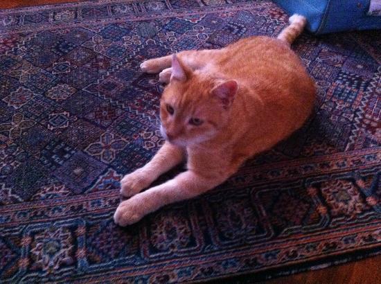 Vondel View B&B: Il dolcissimo gatto/the so sweet cat