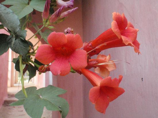 La Almuna: Flower