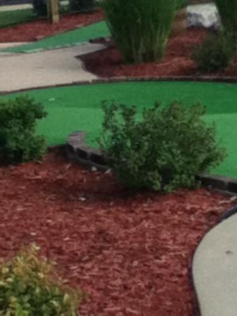 Lost Treasure Golf: bush my golf ball got caught in