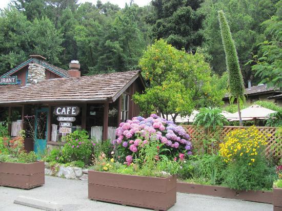 Ripplewood Resrt Restaurant : Beautiful vegetation