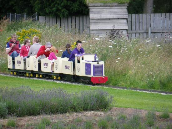 Wolds Way Lavender: Ride the Lavender Express