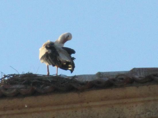Hospedaje Bar El Gato: storks across the street