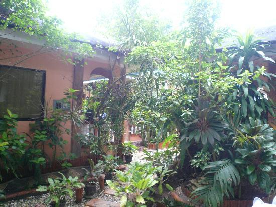 Dave's Straw Hat Inn: Garden