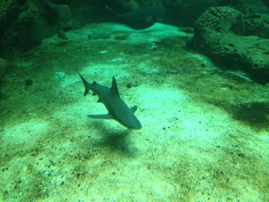 Критский морской аквариум: Blue shark!