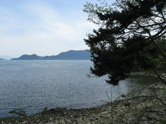 Orcas Island Bayside Cottages: Beach is just a short walk down the hill