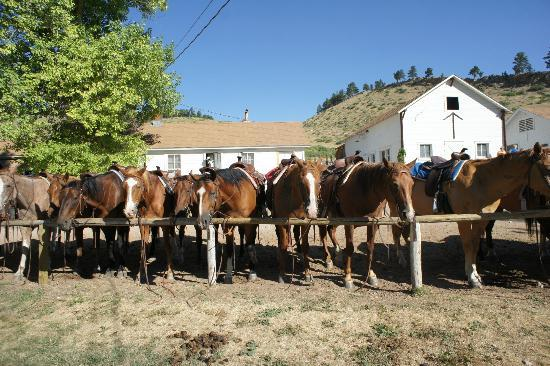 Eatons' Ranch: horses