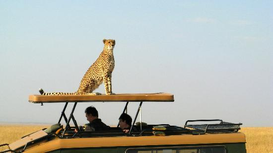 Fig Tree Camp: Cheetah mom