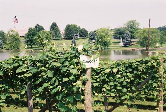 Huber's Orchard & Winery: Vineyards