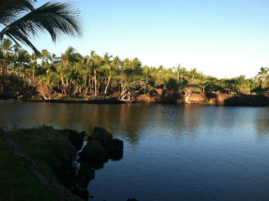 The Islands at Mauna Lani: Along a walking path through the resort