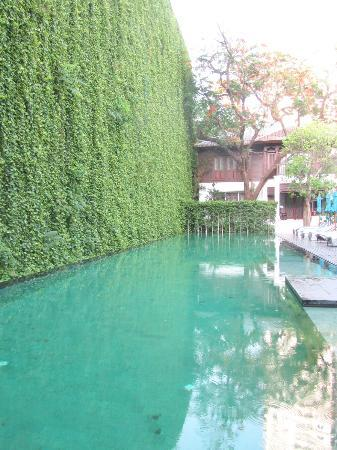 The botanical wall in the outdoor pool area