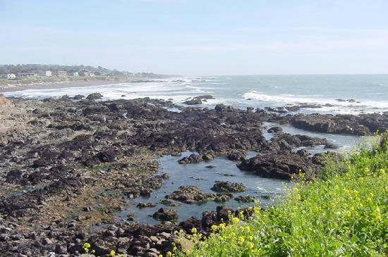 Cambria, Kalifornien: The Moonstone beach tide pools at low tide are an extraordinary educational experience!