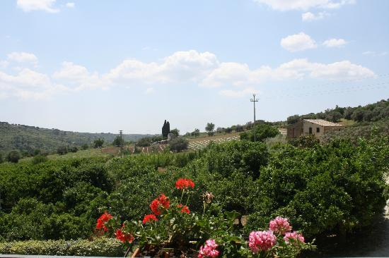 Farm Il Casale delle Rose: Over looking the orange groves from the balcony
