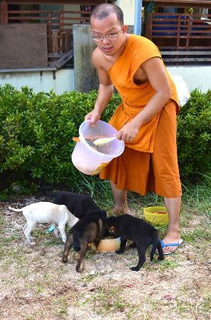 ‪‪Laem Sor Pagoda‬: Monk feeding cute puppies at Laem Sor Pagoda‬