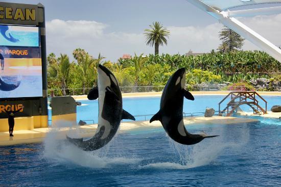 Orcas picture of loro parque puerto de la cruz tripadvisor - Loro parque puerto de la cruz ...