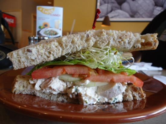 Wildflower Bread Company : Chicken Salad on 9grain bread, huge chunk-o-meat!
