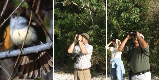 Temascaltepec, México: Observación de Aves