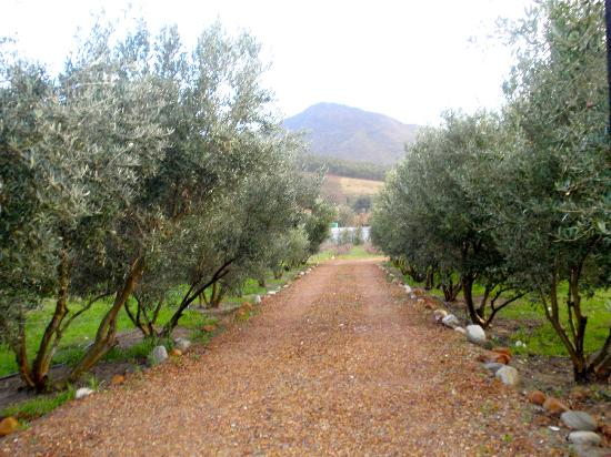 Gooding's Groves Olive Farm & Guest House: Entrance driveway