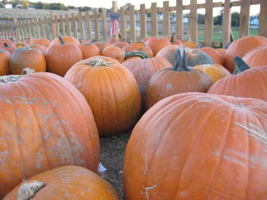 13 charming pumpkin patches near washington dc.