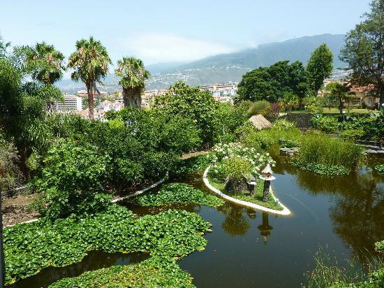 Jardin acuatico risco bello picture of jardin aquatico for Jardines acuaticos