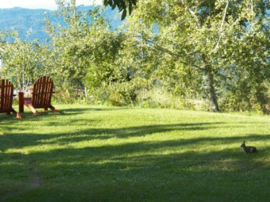 Husum Highlands Bed and Breakfast: A resident bunny enjoys the grounds