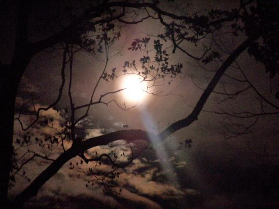 Samasati Retreat & Rainforest Sanctuary: Full moon!