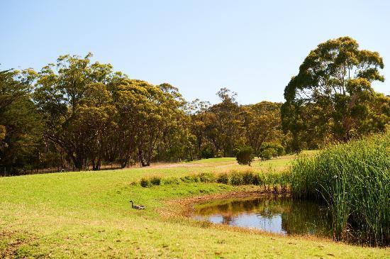 Belair Park Country Club: Golf Course