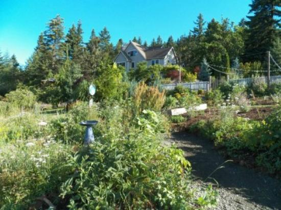 Husum Highlands Bed and Breakfast: a gravel path leads through the wild flower garden