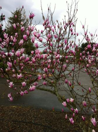 Blue Ox RV Park: more beautiful trees in bloom at the Ox