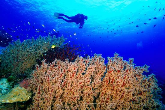 tubbataha reef wallpaper
