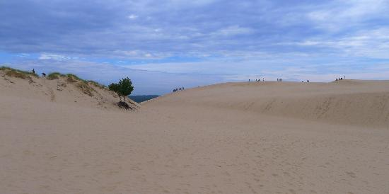 Silver Lake Sand Dunes: Sole tree hanging on for life on the side of a sand dune