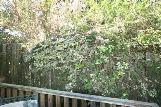 Villa Vista Guest House: Flowers in bloom