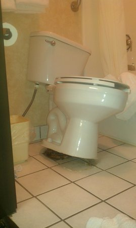 Comfort Inn Marshall: The toilet that was not attached