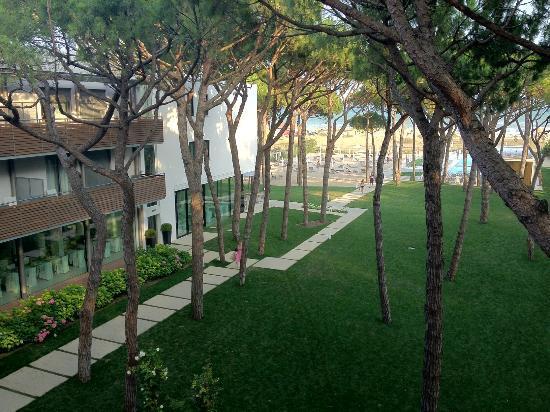 Hotel Mediterraneo: Pineta verso il mare dell'albergo