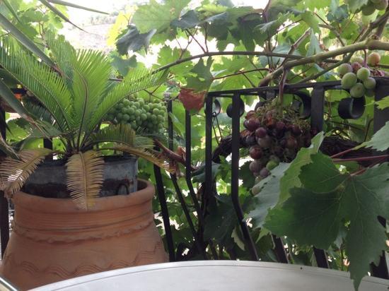 B&B Sole Mare: …il balcone della camera. Che buona l'uva!