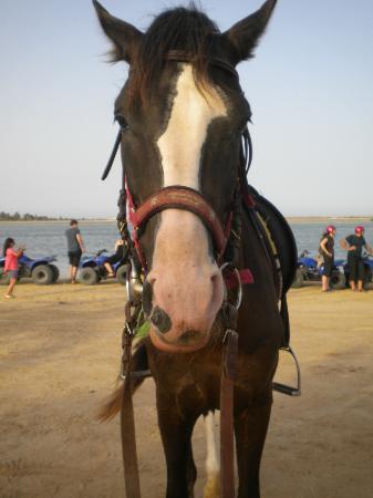 Club Iliade: mio cavallo