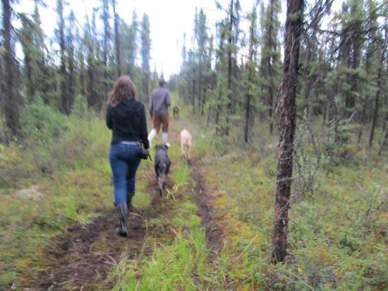 3 Dog Night Hostel: Walking the dogs 