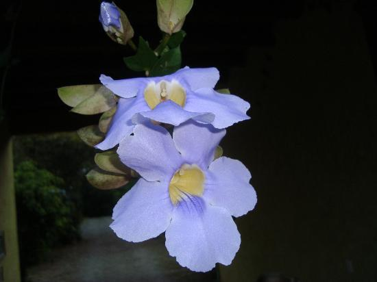 Hacienda La Isla Lodge: Flowers at the portal 