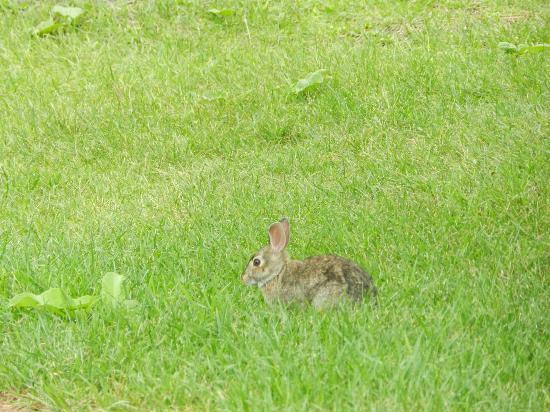 Japanese Gardens : rabbit near park area