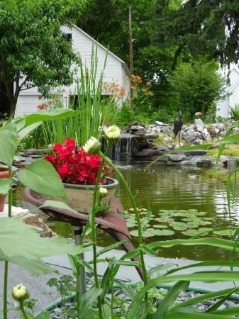 Haven Guest House Bed & Breakfast: Pond