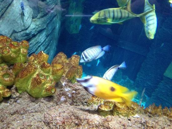 SEA LIFE München: kleine Fische