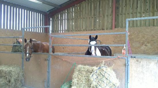 Brandy House Farm: The stables