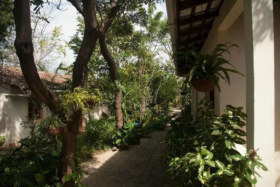 Hotel Casa Barcelona : Garden
